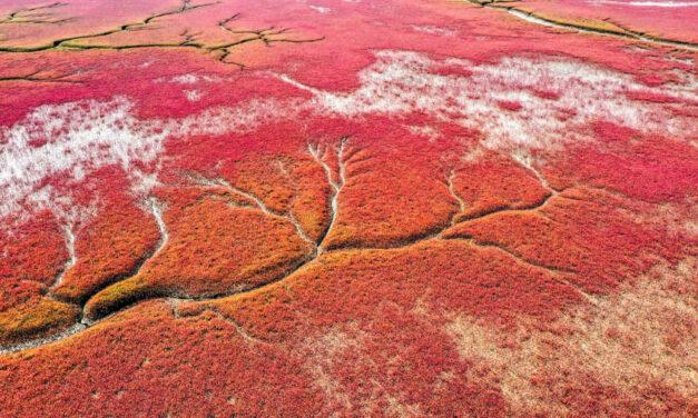 FOTO: Plazhi i kuq që nuk ka nevojë për rroba banje, ku tjetër veç se në Kinë