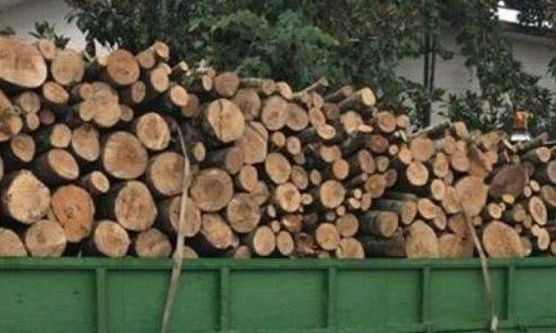 Krime mjedisore, procedohen penalisht 15 persona në qarkun e Dibrës