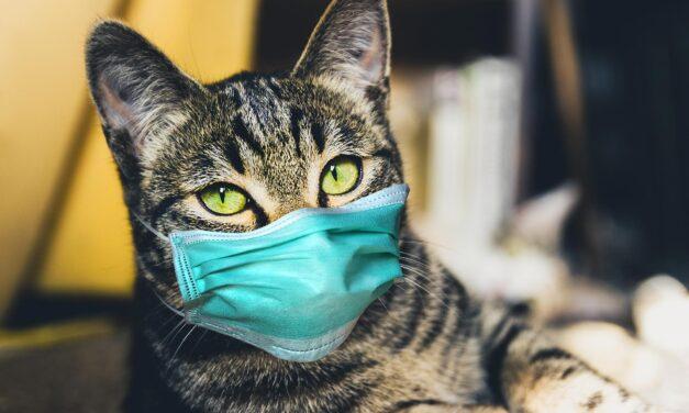 Studimi: Njerëzit mund ta transmetojnë koronavirusin te macet dhe qentë