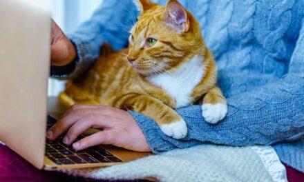 Kush punon nga shtëpia dhe mban kafshë shtëpiake, është më i lumtur