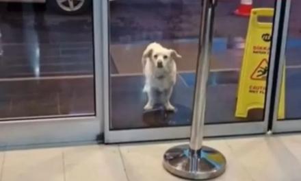 Besnikëria e një qeni që ka ngazëllyer Turqinë e ka marrë famë në botë