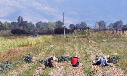 ILO: Në Shqipëri gati 57% e të punësuarve në të zezë, kryeson bujqësia, tregtia dhe ndërtimi