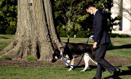 Qeni problematik i Biden kafshon sërish!