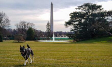 """Kafshuan agjentin e sigurisë, qentë e Joe Biden """"dëbohen"""" nga Shtëpia e Bardhë"""