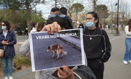 Vrasja e qenve nga Bashkia/ Shoqatat italiane për mbrojtjen e kafshëve: Ndaleni këtë masakër në Tiranë!