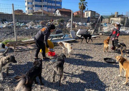 Aktivistët durrsakë për mbrojtjen e kafshëve në betejë me pasigurinë dhe indiferencën