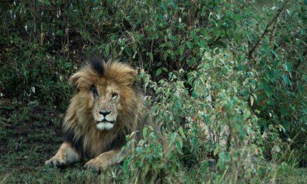 Ngordh luani më i famshëm i Afrikës