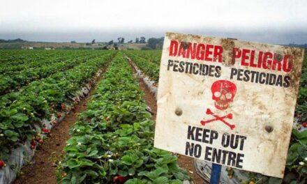 Pesticide kineze për shqiptarët/ KLSH fillon kontrollin tek doganat